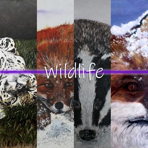 Julie Lovelock Wildlife Gallery